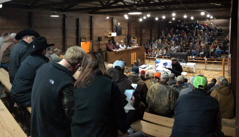participants bidding at the bull sale