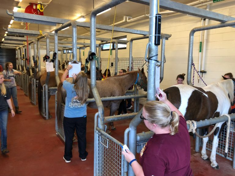 students working in horses in animal health lab