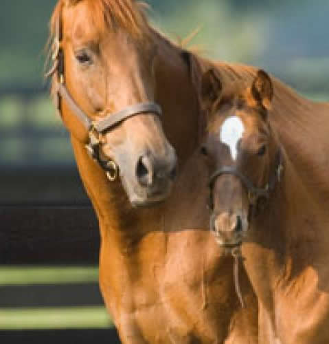 Image of a horse and colt