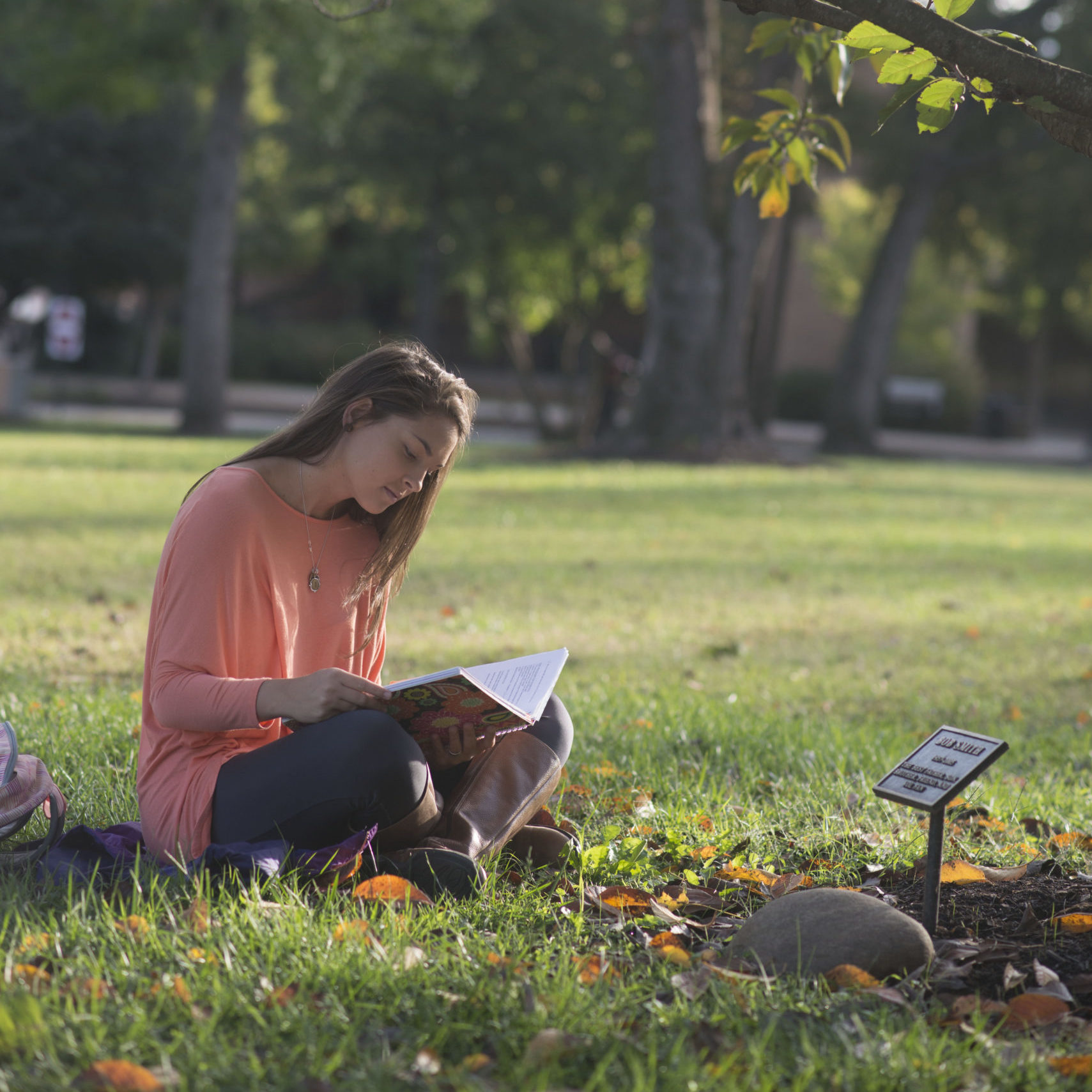 Student sitting under a tree and reading