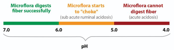 pH range chart with ruminal acidosis