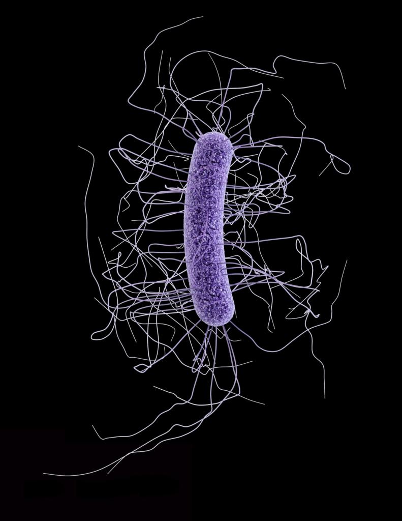bacterium