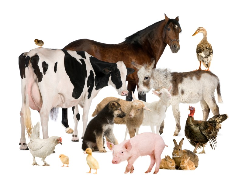 collage of farm animals