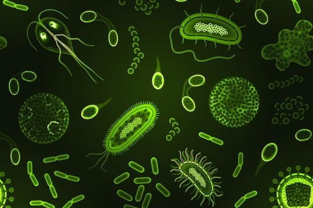 cartoon of microbes