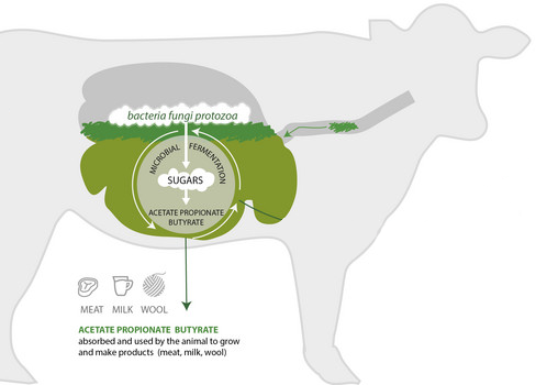 depiction of energy production in the rumen used to make products