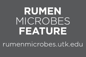 Rumen Microbes Feature, rumenmicrobes.utk.edu