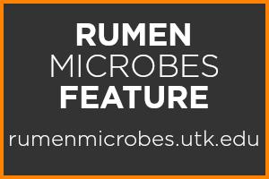 Rumen Microbes Feature Logo, rumenmicrobes.utk.edu
