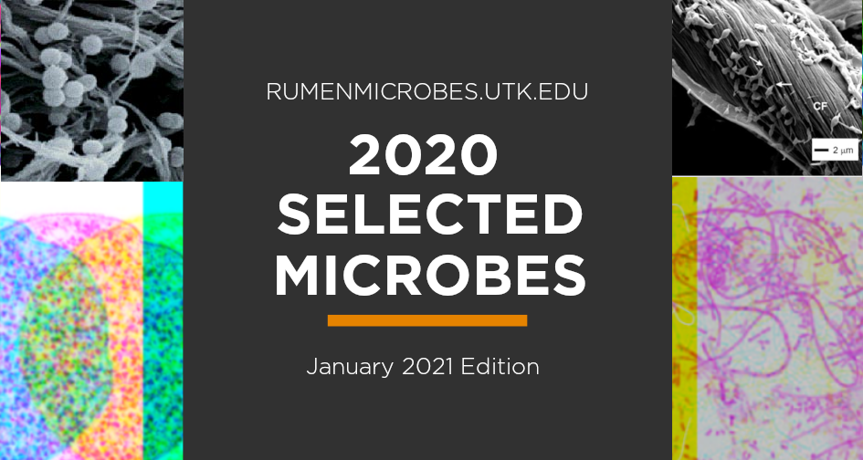 Image depicting highlighting selected microbes from 2020