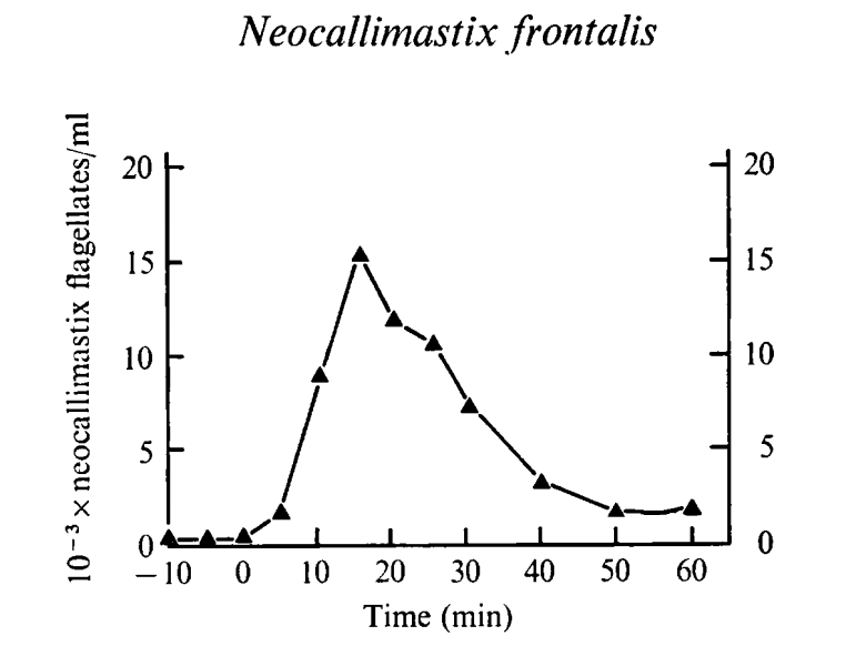 Population density curves for N. frontalis flagellates