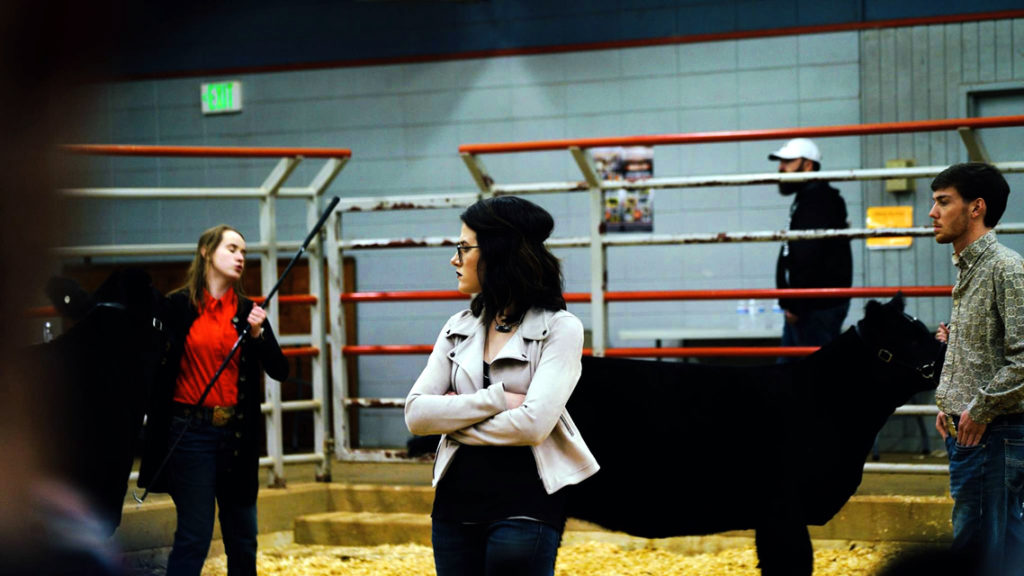 Abigayle judging at a cattle show