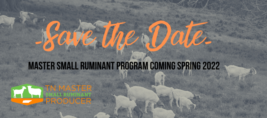 Save the date. Master Small Ruminant Program Coming Spring 2022