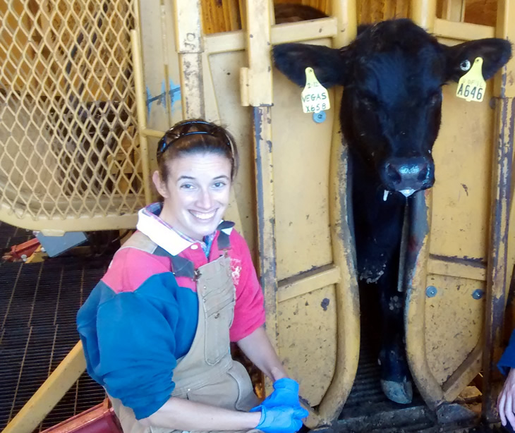 Sonia with a cow in a chute