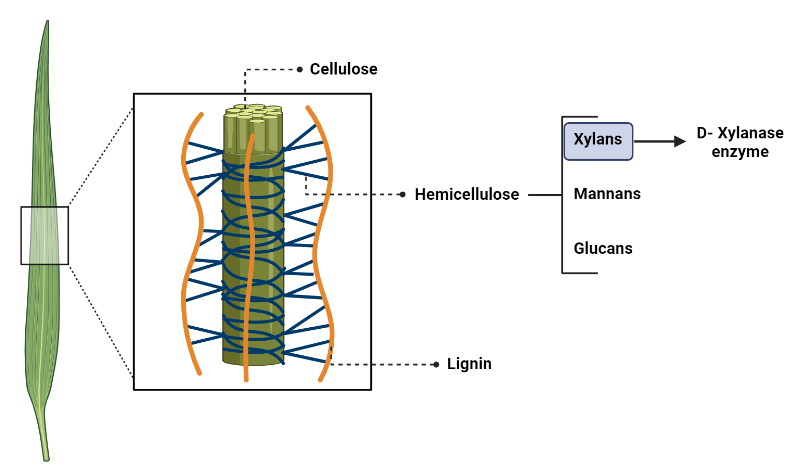 Image of cellulose in plants