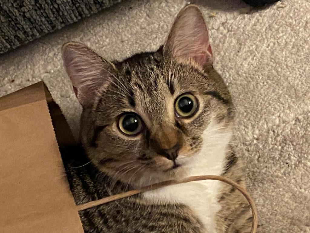 Shelley's cat