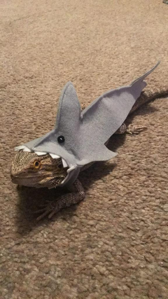 A lizard in a shark costume
