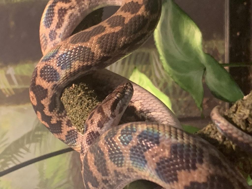 a snake!